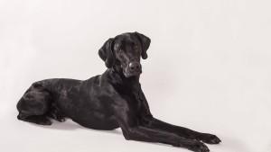 Wer hat Angst vorm schwarzen Hund?