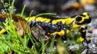 Bio-Initiativen forcieren neue Projekte zum Erhalt der biologischen Vielfalt