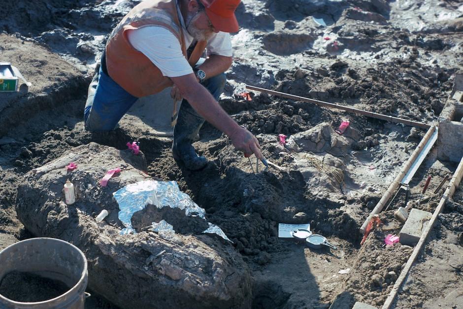 Der Paläontologe  Don Swanson deutet auf Steinfragmente in der Nähe eines Mammutstoßzahns, die in San Diego entdeckt wurden.
