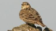 Supercomputer berechnen die Evolution der Vögel