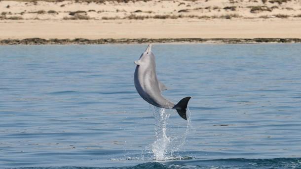 Ein Neuzugang für die große Delphin-Familie
