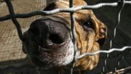 Hunde beißen vor allem Kinder und Jugendliche