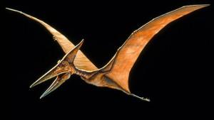 Die fliegenden Giganten der Kreidezeit