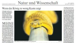 Kletternde Schlangen