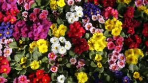 Erquickliche Seitensprünge unter Blumenkindern