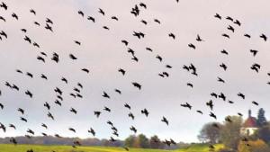 Vögel profitieren von den Abkommen
