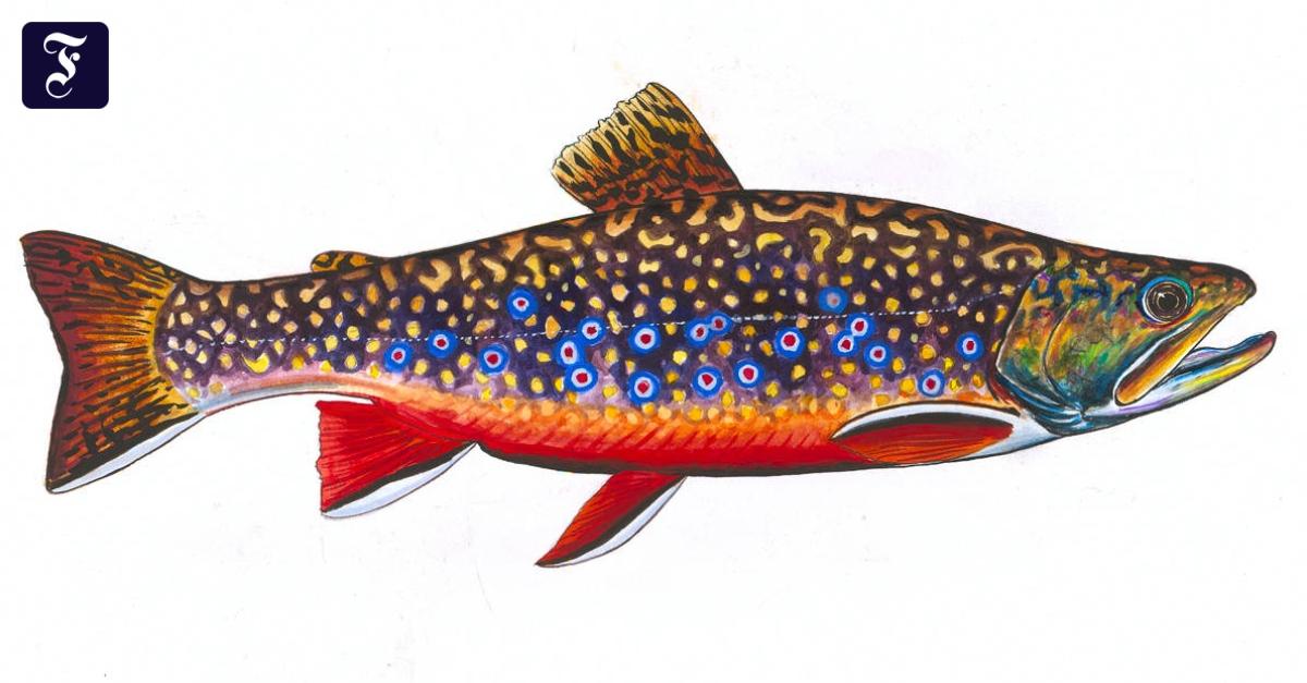 Es ist so einfach, eine Menge Fische im Meer zu verwenden Datierung Internetseite.