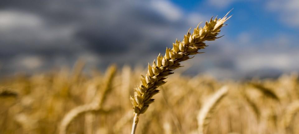 Durre In Deutschland Bauern Klagen Uber Trockenheit