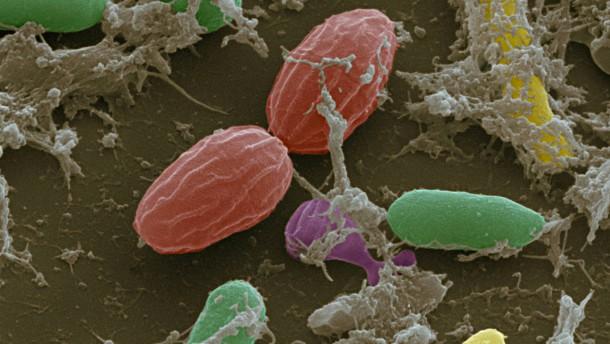 Wie die Darmflora die körpereigene Abwehr aktiviert