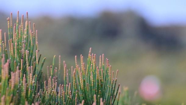 Diese Pflanzen sind radikal lokal
