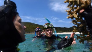 Das Horrorjahr für das Great Barrier Reef