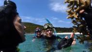 Meeresforscherin Alison Jones demonstrierte kürzlich australischen Politikern das Korallensterben vor Great Keppel Island im Bundesstaat  Queensland.