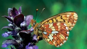 Forscher: Großes Artensterben steht bevor