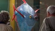 Erster warmblütiger Fisch entdeckt