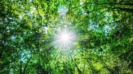 Die am Tag über Photosynthese gewonnene und in den chemischen Bindungen gespeicherte Sonnenenergie können Pflanzen auch nachts nutzen.