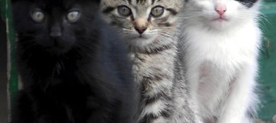 Katzen datieren Profil Online-Dating-Seiten holland