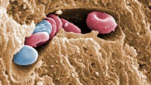 Schichtarbeit beeinflusst Blutbildung