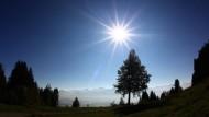 Sonne und Sauerstoff - es geht zur Not auch ohne Bäume