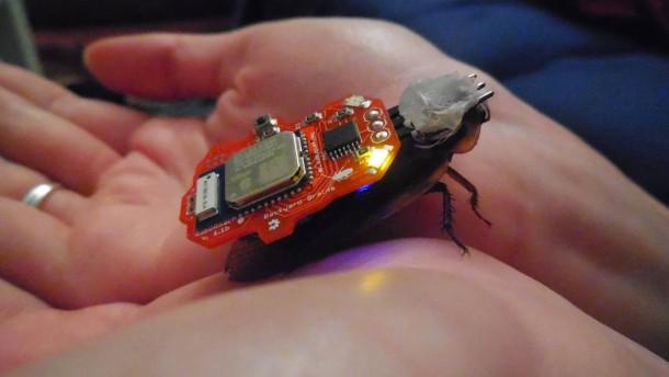 ferngesteuerte insekten wie ich einen kakerlaken cyborg. Black Bedroom Furniture Sets. Home Design Ideas