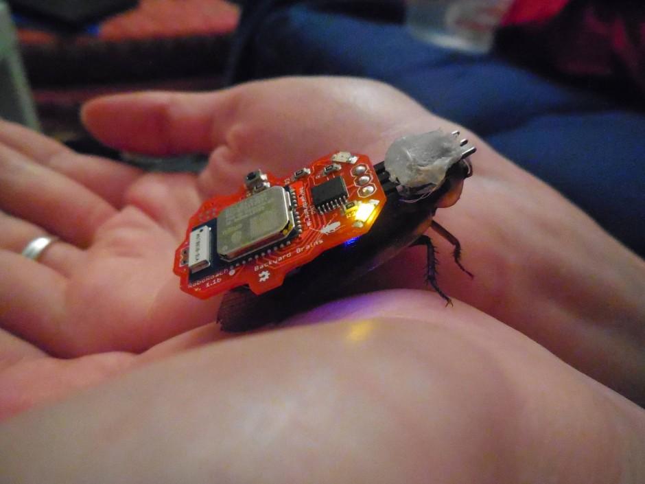 ferngesteuerte insekten wie ich einen kakerlaken cyborg erschuf. Black Bedroom Furniture Sets. Home Design Ideas