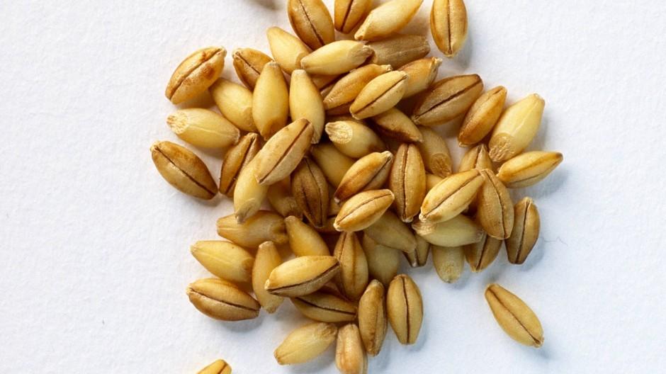 Gerste (Hordeum vulgare) enthält das Prolamin Hordein, auf das Zöliakiepatienten reagieren.