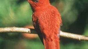 Kolibris im Höhenflug