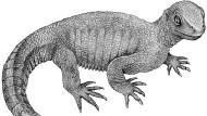 Die älteste Schildkröte der Welt