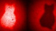 Rotes Licht macht den Umriss einer katzenförmigen Blende sichtbar, ohne dass die Photonen zuvor in die Nähe der Blende gekommen sind.