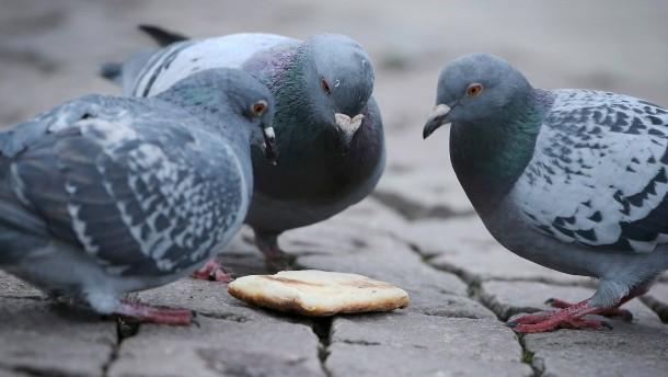 Jenaer Forscher finden neue Vogelbakterien