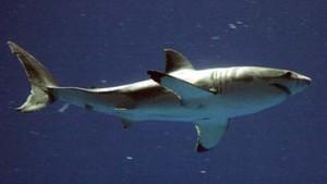 Leichte Beute für Patent-Haie