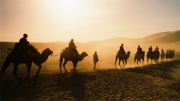 Von der Schönheit der Kamele