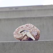 Mysterium Gehirn