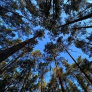 Trockene Böden und Borkenkäfer machen den Nadelbäumen zunehmend zu schaffen