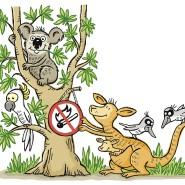 Gefährliche Eukalyptusbäume: Ihr ätherisches Öl kann wie ein Brandbeschleuniger wirken; die Rinde blättert und lässt Funken leicht überspringen.
