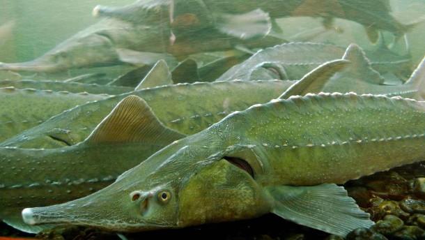 Hoffnung für einen Fisch