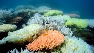 Am Great Barrier Reef entsteht ein riesiger Kohlehafen