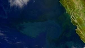 Planktonwachstum durch natürlichen Dünger