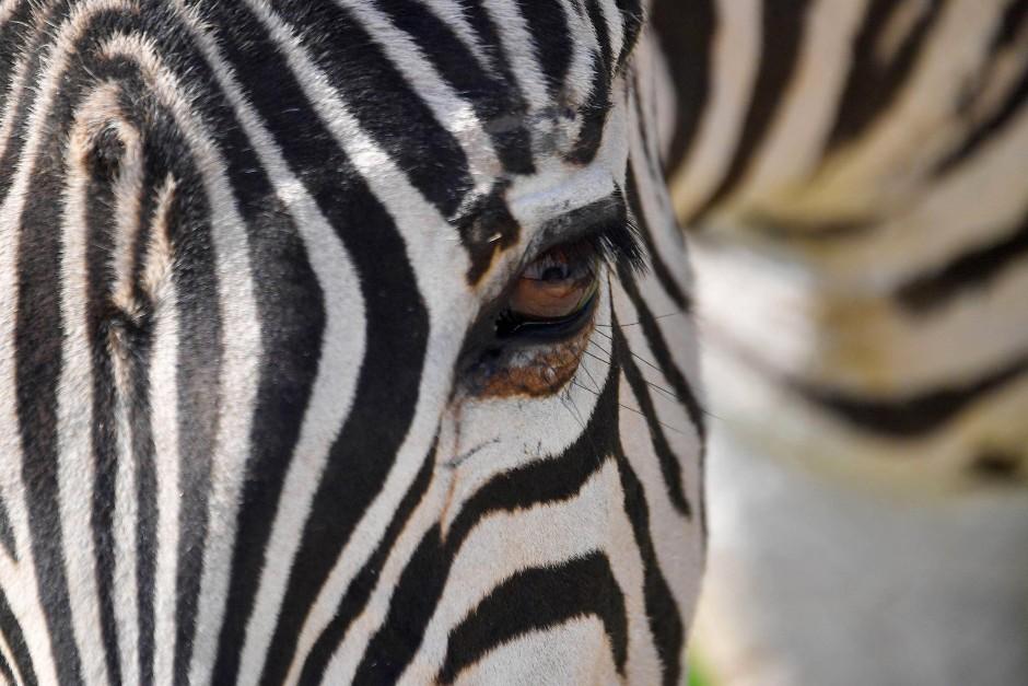 Auch Schwarz und Weiß und die Muster, die sie bilden, sind wichtige Farbeffekte in der Natur.