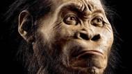 Rekonstruktion des Minihirn-Menschen Homo naledi.