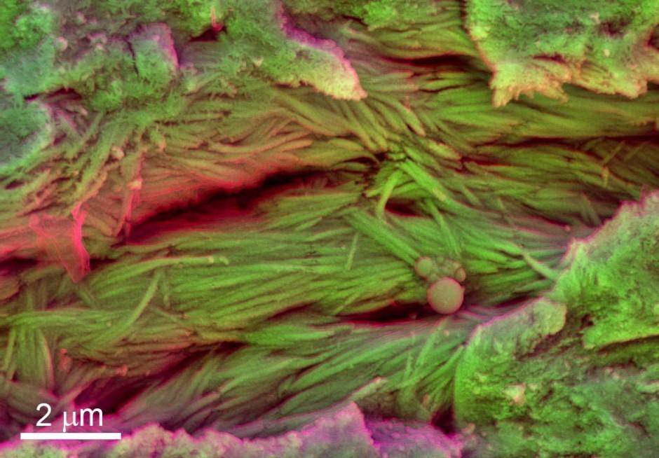 Fossile Gewebefasern