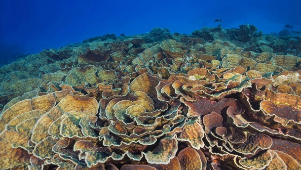 Die Macht der Farben im Korallenriff