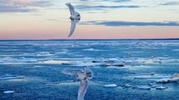 Polareis im Sturzflug