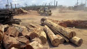 Staaten und Firmen erstmals einig bei Rettung der Regenwälder