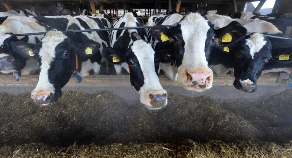 Interview zur zukunft der weltern hrung die tierdichte for Reduziert leben