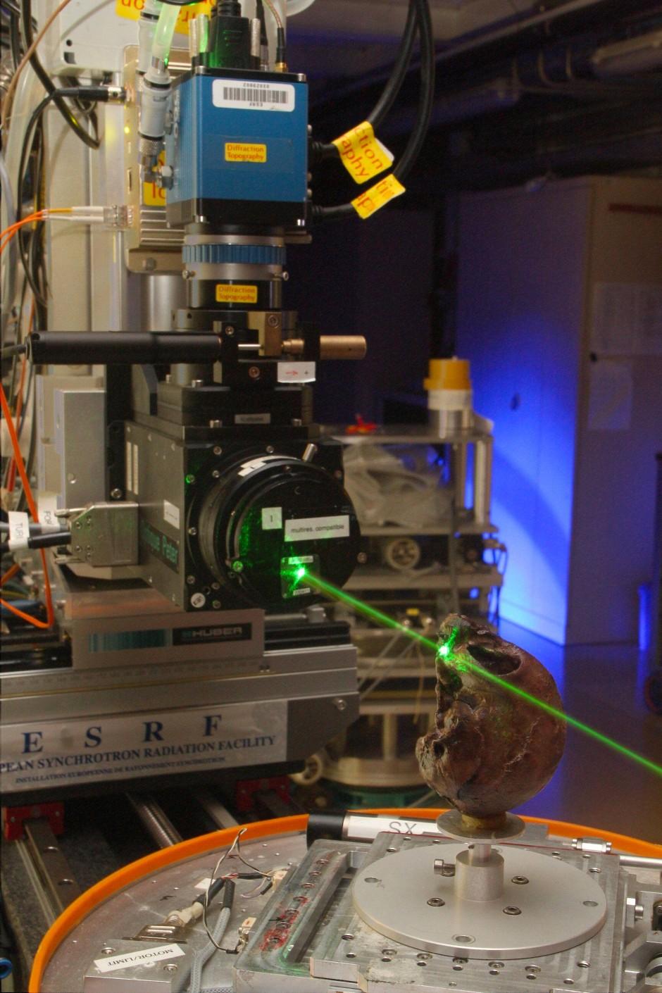 In Grenoble ist der Schädel von N. alesi mit Röntgenstrahlen genauer unter die Lupe genommen worden.