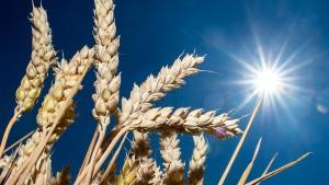 Wie der Klimawandel unser Essen verdirbt
