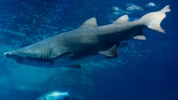 Keine Haie in Pfungstadt