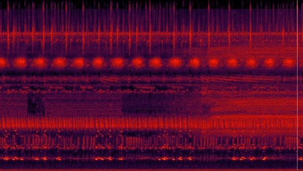 Frequenznischenbeispiel aus dem tropischen Regenwald von Borneo