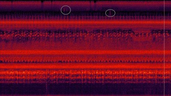 Frequenznischenbeispiel aus dem Regenwald in Afrika