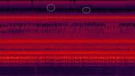 Frequenznischen im Afrikanischen Regenwald